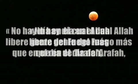 Ayunando el Dia de Arafah  .